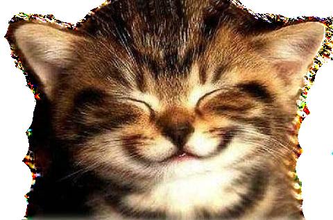 happy-cat3